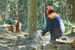 Lumberjack cutting tree in forest Stock Image