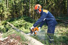 Lumberjack cutting tree in forest Stock Photography