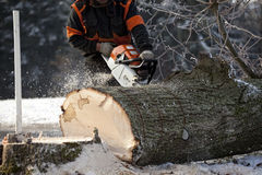 Lumberjack cutting tree. Proffesional Lumberjack Cutting big Tree during the Winter wearing protection clothes using chainsaw close up view Royalty Free Stock Image