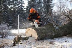 Lumberjack cutting tree Royalty Free Stock Images
