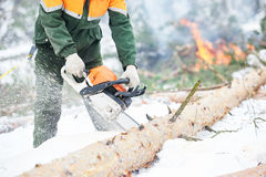 Lumberjack cutting tree in snow winter forest Stock Images