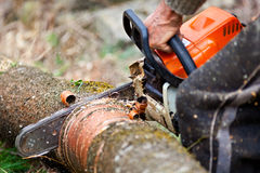 Lumberjack cutting a tree trunk with chainsaw. Closeup of worker's hands with chainsaw, cutting a tree trunk Stock Photography