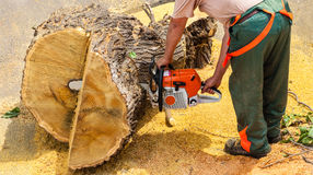 Lumberjack cutting a tree using chainsaw Stock Image
