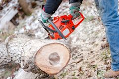 Lumberjack cutting wood with chainsaw Stock Image