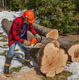 Lumberjack cutting wood royalty free stock images