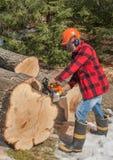 Lumberjack cutting wood stock photos