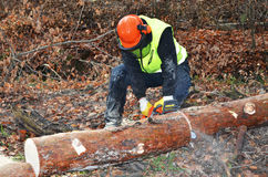 Lumberjack doing his work Royalty Free Stock Photo