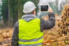 Lumberjack filmed piles of logs with tablet PC in forest Stock Photos