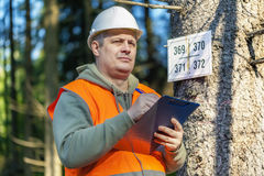 Lumberjack with folder near marked tree in forest Stock Image