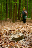 Lumberjack in forest. Close up of cut tree stump with lumberjack in background royalty free stock photo