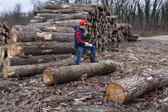 Lumberjack with laptop Royalty Free Stock Images
