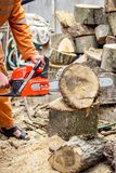 Lumberjack logger worker in protective gear cutting firewood timber tree in forest with chainsaw Stock Photos
