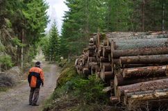 Lumberjack at a logpile. Of softwood at a dirt road in the forest Stock Photo