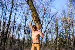 Lumberjack lub woodman półpostaci zgromadzenia seksowny nagi mięśniowy drewno Mężczyzna brutalny seksowny lumberjack niesie dużeg fotografia royalty free