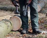 Lumberjack marking timber logs Stock Images