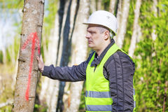 Lumberjack near marked tree. In forest Royalty Free Stock Images