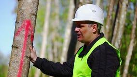 Lumberjack near marked tree in forest stock video footage