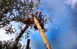Lumberjack på arbete Arkivbilder