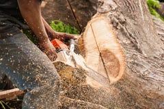 Lumberjack pracownik w pełnej ochronnej przekładni tnącej łupce Zdjęcia Royalty Free