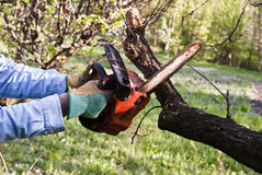 Lumberjack pruning with a chainsaw Royalty Free Stock Photography