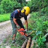 Lumberjack przy pracą Zdjęcia Stock