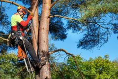 Arborist at work. Lumberjack with saw and harness climbing a tree Royalty Free Stock Photos