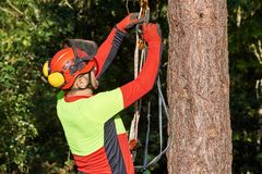 Arborist at work. Lumberjack with saw and harness climbing a tree Stock Images
