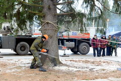 Lumberjack sawing a huge tree for installation in the Kremlin. Royalty Free Stock Photos