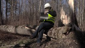 Lumberjack sitting and reading documentation on fallen tree in park. In autumn day stock footage