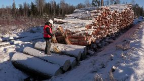 Lumberjack throw rope near pile of logs in winter stock video footage
