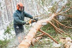 Lumberjack tnący drzewo w śnieżnym zima lesie Obrazy Royalty Free