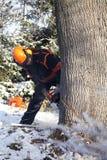 Lumberjack tnący drzewo Obrazy Stock