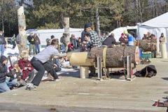Lumberjack Two Man Bucksaw competition starting Stock Images