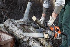 Lumberjack używa piłę łańcuchową ciie dużego drzewa podczas jesieni clo fotografia stock