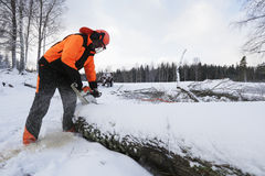 Lumberjack, winter and snow stock photo