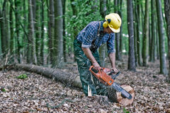 Lumberjack in the woods stock images