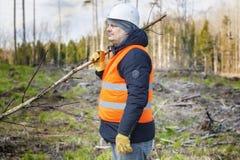 Lumberjack in the woods Stock Image