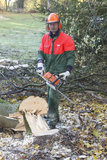 Lumberjack at work Stock Photo