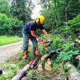 Lumberjack at work Royalty Free Stock Images