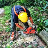 Lumberjack at work Stock Images
