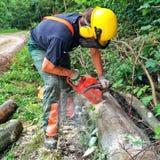 Lumberjack at work Stock Photography