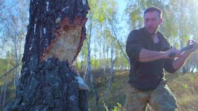 Lumberjack worker chopping down a tree breaking off many splinters in the forest with big axe. Strong healthy adult. Ripped man with big muscles working with stock video footage