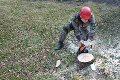 A lumberjack working with a chainsaw stock photo