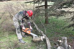 A lumberjack working with a chainsaw Stock Photography