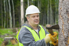 Lumberjack working in the forest Stock Photography
