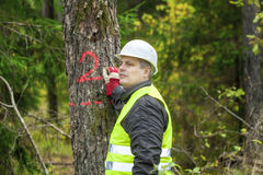 Lumberjack write on tree. In forest Royalty Free Stock Photo