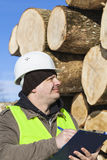 Lumberjack  writing near at the log pile Stock Image