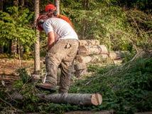 2 lumberjacks режа деревья Стоковое фото RF