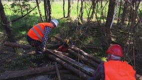 Lumberjacks bel miary zdjęcie wideo