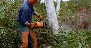 Lumberjacks ciie drzewa w lesie 4k zbiory wideo